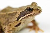 Froggy — Stockfoto