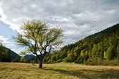 árbol y el bosque — Foto de Stock