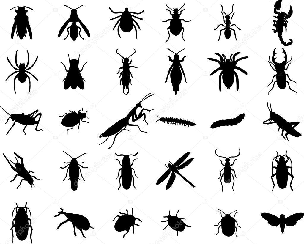 Bugs silhouette — Stock Vector © paunovic #7922676