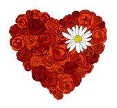 Hjärta av rosor och daisy — Stockvektor