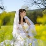 Bride in field — Stock Photo #7000726