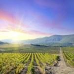 Vineyards — Stock Photo #7386997