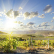 Vineyards - Stock Photo