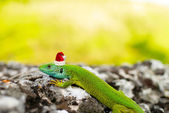 The lizard in the Santa's cap — Stock Photo