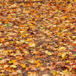Many yellow and orange dry leaves lying on the ground — Stock Photo #7316256