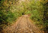 Autumn landscape: road in a grove — Foto de Stock