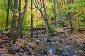 Autumn forest with wood bridge — Stock Photo