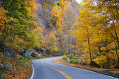 Autumn woods foliage with road — Stock Photo