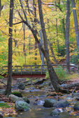 Wood bridge with Autumn forest over creek — Стоковое фото