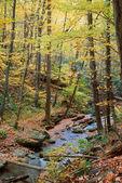 Autumn maple wood — Стоковое фото
