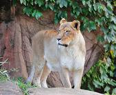 Chicago zoo — Stock Photo
