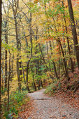 Autumn trail in forest — Stock Photo