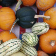 Fall Gourds — Stock Photo #6935971