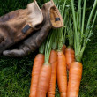 Carrots ready to eat and work gloves — Stock fotografie