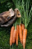 Carrots ready to eat and work gloves — Stock Photo
