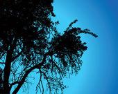 Tree over night sky, vector illustration. — Stock Vector