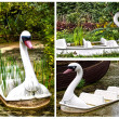 Swan lake — Stock Photo #6812139