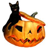 Cat in Pumpkin — Stock Photo
