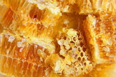 Honey comb. — Stock Photo
