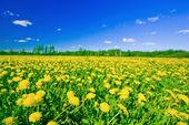 Encanto del verano — Foto de Stock