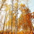 Forest birch — Stock Photo #7164605