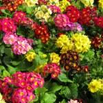 Flowers — Stock Photo #7410546