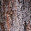Closeup of tree bark rough texture — Stock Photo #7411223