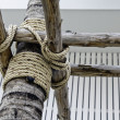 Rope at coconut tree — Stock Photo #7098092