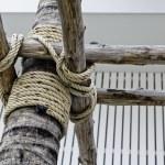 Rope at coconut tree — Stock Photo