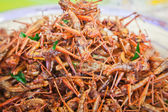 Fried grasshoppers — Stock Photo