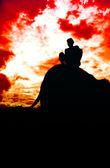 Elephant silhouette — Stock Photo