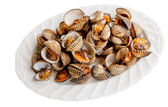 Little sea shell cockle — Stock Photo