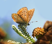 A closeup of a butterfly a flower and a blue sky — Stock Photo