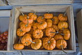 Small orange pumpkins mini jacks — Stock Photo