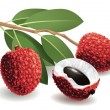 Royalty-Free Stock Vector Image: Lychee Fruit