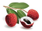 Lychee Fruit — Stock Vector