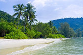 Tropical Beach with coconut palm trees — Stok fotoğraf
