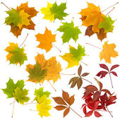 Set of autunm leaves — Stock Photo