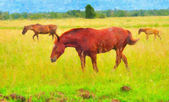 Picture three horses on a pasture — Stock Photo