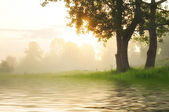 Foggy dawn on the river — Stock Photo