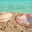 Sea shell and the pearl — Stock Photo