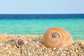 Sea shells on the beach #1 — Stock Photo