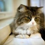Cat sitting on shelf near windowsill — Stock Photo #7329831