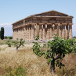 Greek temple Paestum - Foto Stock