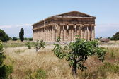 řecký chrám paestum — Stock fotografie