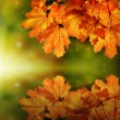 Fairy tale autumn maple leaf reflection — Stock Photo