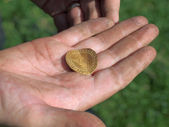 Metal detecting find — Stock Photo