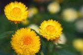 Yellow flower — Foto Stock
