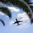 Airplane flying over tropical palm trees — Stock Photo #7592172