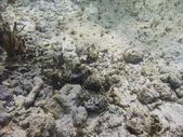 Dno oceanu — Zdjęcie stockowe